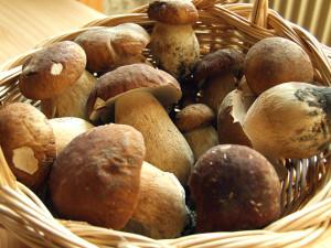 Sagra Funghi Porcini
