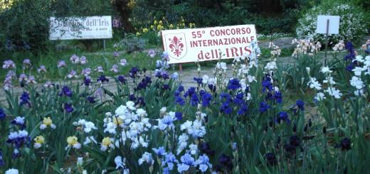 giardino-iris-May-11-040