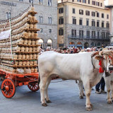 1843-carro_matto_2012_a_firenze