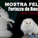 worldcatsfirenze1
